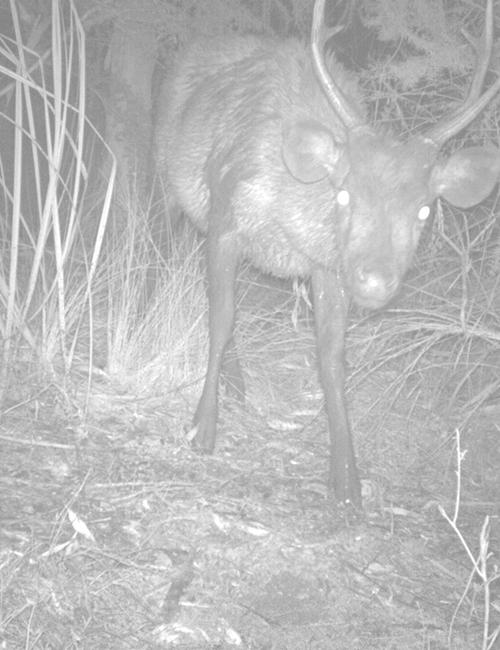 deer-night-1