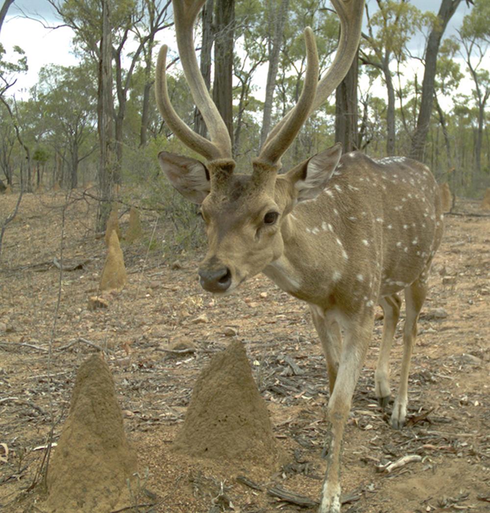 events-deer-1