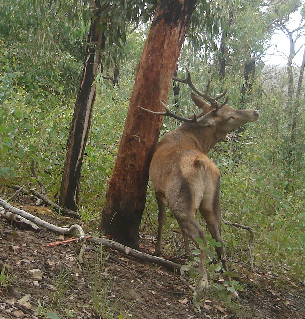 events-deer-2