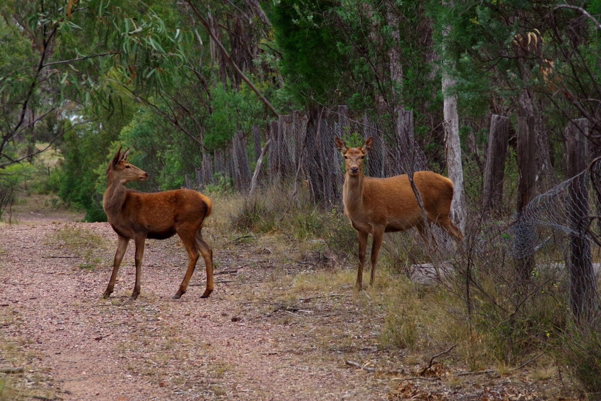 events-deer-3